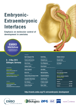 Embryonic- Extraembryonic Interfaces - Events