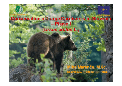 Conservation of Large Carnivores in Slovenia – Phase I (Ursus