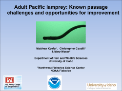 Adult Pacific lamprey: Known passage challenges and
