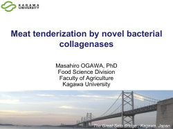 Meat tenderization by novel bacterial collagenases