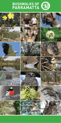 Bushwalks of Parramatta 2014 (web)
