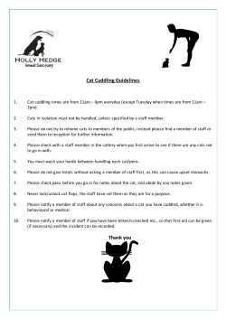 Cat Cuddling Guidelines Thank you