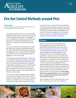 Fire Ant Control Methods around Pets