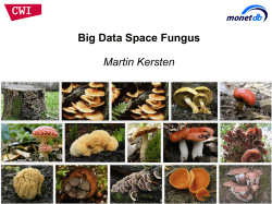 Big Data Space Fungus Martin Kersten