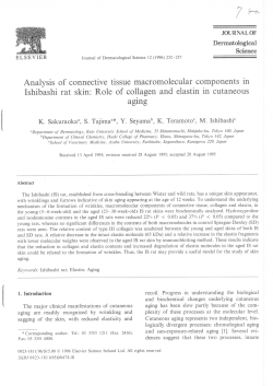 of connective tissue macromolecular components in