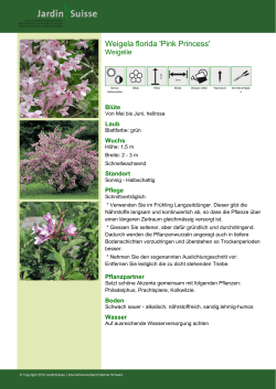 Weigela florida `Pink Princess`