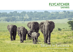 Safaris in Tanzania - Flycatcher Safaris