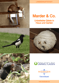 Marder & Co.